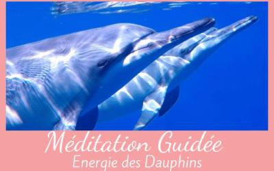 Méditation guidée avec les dauphins