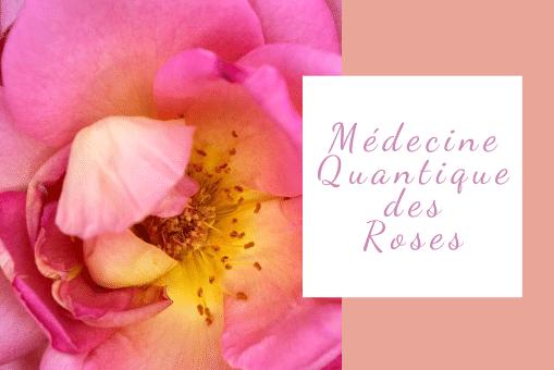 Le pouvoir de guérison des roses